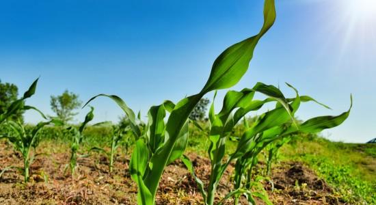 plant-4803128_1280